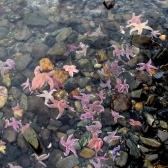 So many starfish! Amazing!
