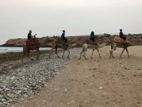 Beach camel ride