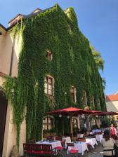 Cool vine covered building